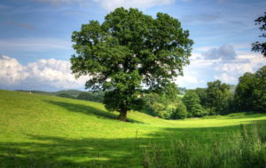 Green Tree Wallpapers For Walls