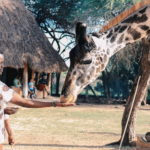 African Safari Animal Pictures