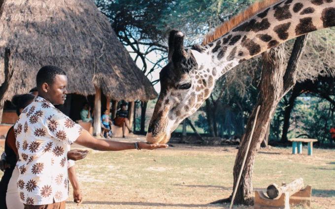 African Safari Animal Pictures