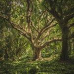 Beautiful Tree Photo