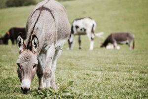 Donkey Image Download