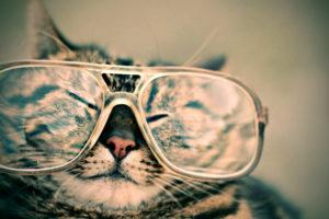 Funny Kitten Wallpaper