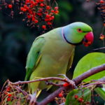 Green Parrot Image
