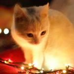 Kitten Wallpaper Iphone