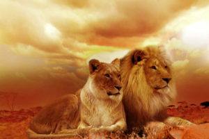 Lion Family HD Wallpaper