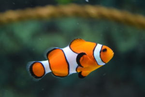 Orange And White Fish