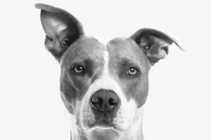 Black And White Dog Wallpaper
