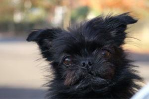 Black Dog Images