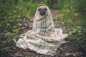 Cute Pug Pics