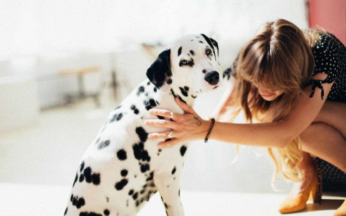 Dalmatian Dog Image