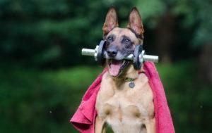 German Shepherd Funny Pictures