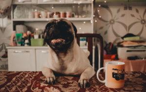 Pug Life Wallpaper