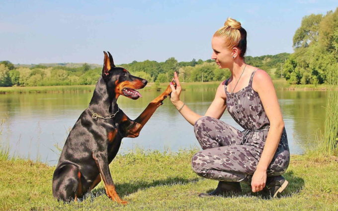 Doberman Pinscher Images