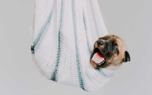 Funny Dog Puppy